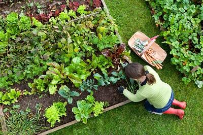 iStock 157505043%20Bac%20palettes%20Ok%20MC Fabriquer soi même ses bacs de culture terrasse ou jardin en 10 étapes