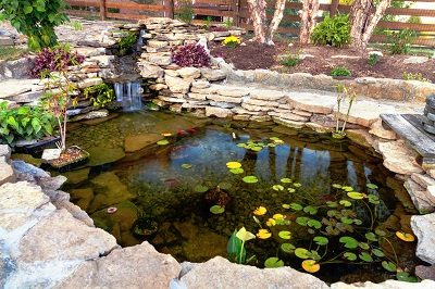 iStock.com%20 %20alexeys Agrémenter son bassin de jardin