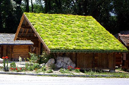 Toiture végétale pour toit en pente